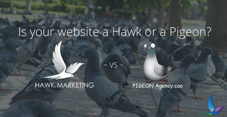 Is Your Website a Hawk or a Pigeon ?